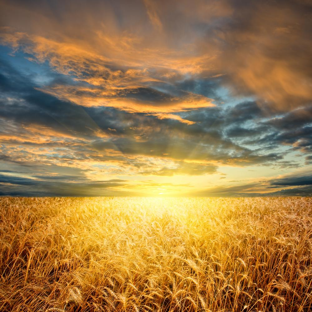 Nigeria spends N635b on wheat yearly, says minister of ...
