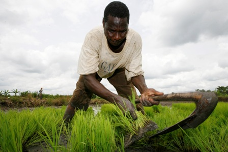 http://naijaintellect.files.wordpress.com/2012/09/farmer.jpg?w=448&h=299